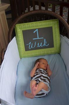 newborn weekly photos