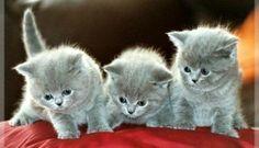 Belles images de Chiens et chats
