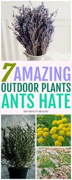 867 best Home Garden Ideas images on Pinterest in 2018 Gardening