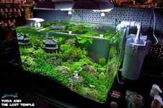 Yoda and the lost temple Aquarium Terrarium, Glass Aquarium, Nano Aquarium, Aquarium Design, Reef Aquarium, Planted Aquarium, Aquascaping, Aquarium Landscape, Nano Tank