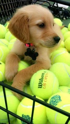 This adorable pup is living all the dog dreams! You can never have too many tennis balls!