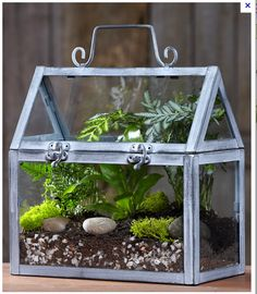 Captivating Miniature Greenhouse Terrarium Kit From ProFlowers