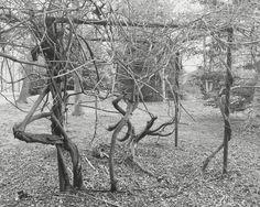 Alapocas Woods