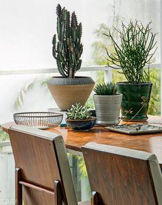 Dicas de como cultivar flores dentro de casa. http://www.feminices.blog.br/cultivar-flores-dentro-de-casa/