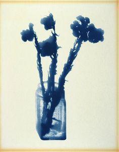 Lourdes Castro's Grand Herbier D'Ombres