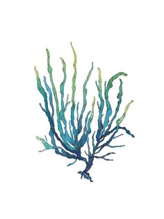 blue green seaweed watercolor art print 8x10 inches nautical coastal art illustration on Etsy, $25.00