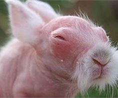 14 Bald Animals You'll Fall Madly in Love With