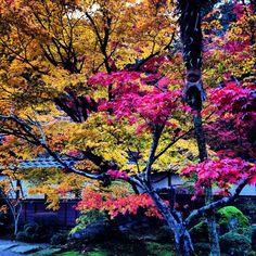 #彦根 よりおはようございます(^O^)/ 写真は西明寺の紅葉。鮮やかです♪ 今日は宣伝です(笑)私のFBページにいいね!頂けるとすごく嬉しいです♪http://www.facebook.com/itojingo ということで、 今日も張り切っていきましょう(^ー^)ノ