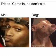 38 Funny Random Memes That'll Give You A Hefty Guffaw
