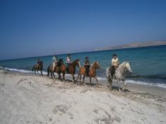 Riding on the beach for all ages, all levels of experience http://horsesnsheep.wix.com/saltlakestableskos#!the-beach-photos/cbxn