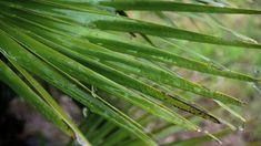 LA MONADE ( 432hz) Plant Leaves, Plants, Music, Plant, Planets
