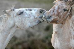 "Andrea Rincón: ""Los caballos me salvaron""  https://www.facebook.com"