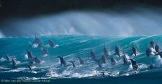 BBC Wildlife Awards 2013 - ANIMALS IN THEIR ENVIRONMENT - RUNNER UP: 'Surfing Delight' by Wim van den Heever