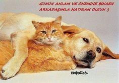 4 Ekim Hayvanları Koruma Günü kutlu olsun... #hayvanlarıkorumagünü #patilidostlarımıziçineleleolalım #unutmayalım #worldanimalday