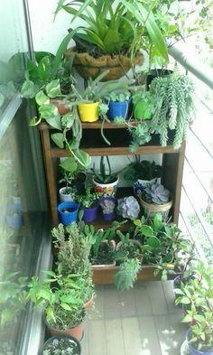 Usé el mueble para organizar el jardín en el balcón.