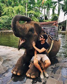 Elefantes rosados dumbo latino dating