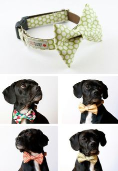 SO CUTE !!! Doggy Dress Up! Sweet idea for doggie  dress up day! #bow #bow_tie #dog #dog_collar