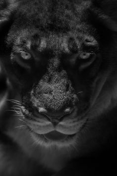 a lion in the darkness, is still a lion....