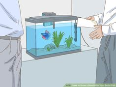 How to Grow a Bond With Your Betta Fish: 11 Steps (with Pictures) Baby Betta Fish, Betta Fish Types, Betta Fish Tank, Beta Fish, Colorful Fish, Tropical Fish, Betta Aquarium, Fish Care, Siamese Fighting Fish