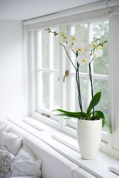 #pintratuin- must have in your home. Wit stilleven.