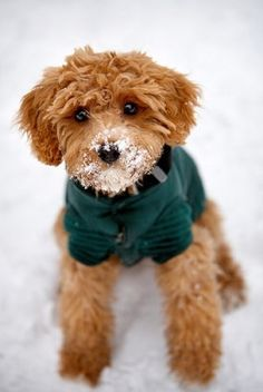 Dog in a green coat playing in snow