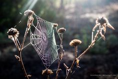 morning light by isischneider on DeviantArt