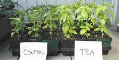Fácil truco para que tus plantas crezcan más rápido