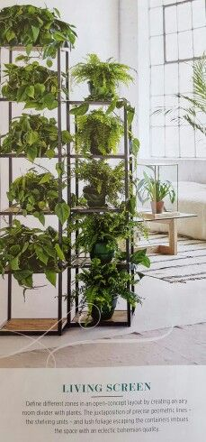 Living screen... house plants as a room divider