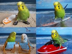 budgies on vacation lol