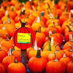 Halloween Photography, Pumpkin Patch Photos, Autumn in New England, Fall, Pumpkins, Happy Halloween, Orange Fall Decor, Harvest by slightclutter on Etsy https://www.etsy.com/listing/465611358/halloween-photography-pumpkin-patch