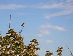 The Bird Still Sings: Why Christianity Cannot Be Silenced RZIM_the_bird_still_sings_ravi_zacharias_blog_apologetics_online_web