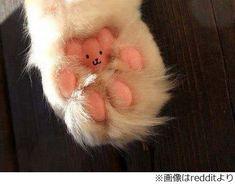 猫の足の裏に隠れていたもの、ぷにぷにの肉球好き悶絶の一枚に反響。   Narinari.com