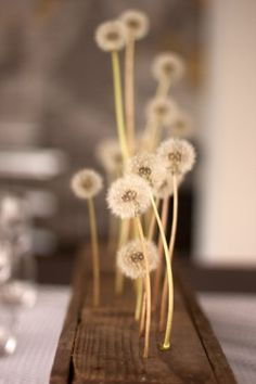 DANDELION WINE DINNER PARTY - so clever using delicate dandelions as centerpiece