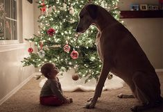 fotos niños y sus mascotas