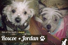 Homes Alive Pet of the Month - Roscoe and Jordan! --> http://go.homesalive.ca/blog/bid/306978/Pet-of-the-Month-Enter-Roscoe-Jordan