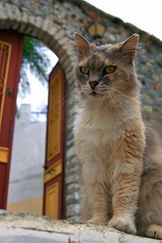 Cat outside the door