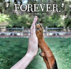 Dobermann. The best canine friend ever.