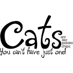 ❤ liked on Polyvore featuring text, cats, words, quotes, backgrounds, phrase and saying
