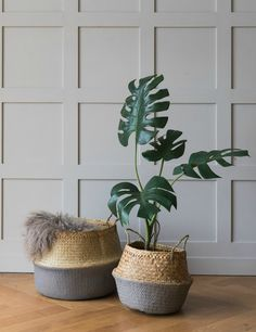 The classic seagrass storage basket is updated with a grey painted effect. Perfect for storing blankets, odds & ends or children's toys, this basket is the stylish way to do storage. Available in two sizes. Botanical Bedroom, Botanical Interior, Seagrass Storage Baskets, Wicker Baskets, Large Baskets, Baskets On Wall, Plant Bags, Storing Blankets, Blanket Basket