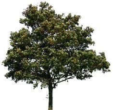 tree 34 png by gd08.deviantart.com on @deviantART