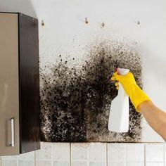 Muffa sui muri: come eliminarla? [VIDEO]
