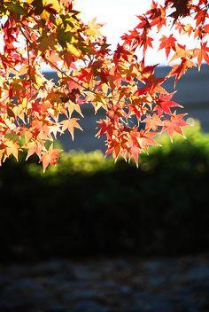 Fall in Augusta, GA