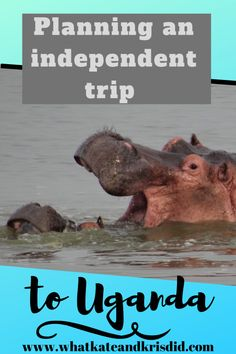 Planning an independent trip to Uganda is easier than you think, and works out much cheaper. Here's our guide to how we planned our Uganda safari and gorilla trekking trip ourselves to do a two week Uganda itinerary. Uganda Travel, Africa Travel, Travel Guides, Travel Tips, Budget Travel, Gorilla Trekking, Freedom Travel, Plan Your Trip, Trip Planning