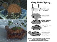 turtle topiary diy
