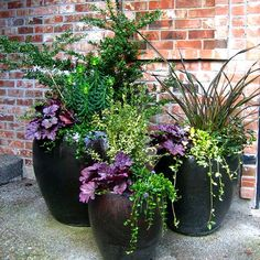 Container gardens become an expression of your style and create an inviting atmosphere to both indoor and outdoor living areas. Container gardens become an expression of your style and create an inviting atmosphere to both indoor and outdoor living areas. Outdoor Flowers, Outdoor Planters, Garden Planters, Outdoor Gardens, Outdoor Potted Plants, Plants In Pots, Planters For Front Porch, Container Flowers, Container Plants