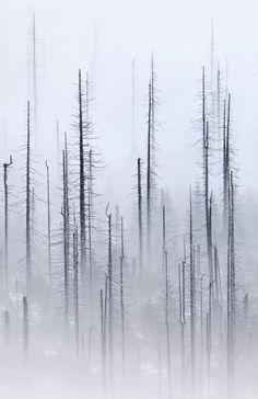 Kilian Schönberger, Cloud Forest (Detail), 2013