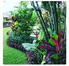 Front Yard Garden Design - The tropical garden is a garden concept designed to resemble a tropical forest. Plants commonly used or characteristic of a tropical garden is a plant that has many shades of color and has a wide l… Florida Landscaping, Florida Gardening, Tropical Landscaping, Front Yard Landscaping, Landscaping Ideas, Pool Landscaping Plants, Backyard Ideas, Large Backyard, Backyard Movie