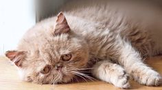 AWWWW...  Sad Cat Diary  #Caturday