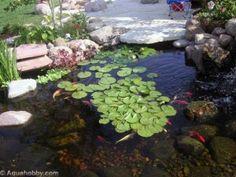 Plantas aquática também são uma opção legal na hora de decorar seu lago ornamental