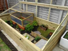 Customer photo of a Harrod Timber Raised Bed being used for a tortoise enclosure, the mesh top stops any predators getting in & keeps the tortoises safe http://www.harrodhorticultural.com/standard-wooden-raised-beds-pid7994.html